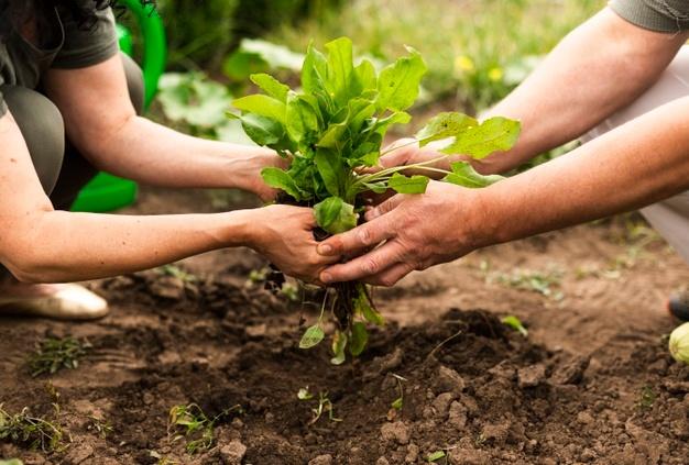 Folija za rastlinjake v kmetijskih prodajalnah